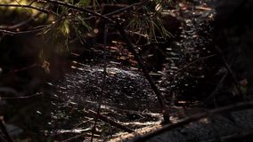 Mystical spider web in the forest stock video footage