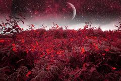 Mystical spring night. Royalty Free Stock Images