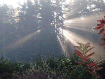 Mystical sunrise, South Bohemia Stock Photos