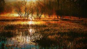Mystical swamp. A swamp with a Mystical feel of a time long past stock images