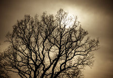 Mystical tree. Bare mystical tree silhouette texture royalty free stock images