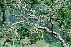 Mystical tree branch with moss. Stock Photo