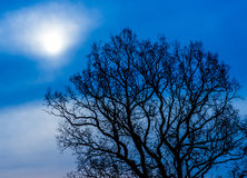 Mystical tree at night. Bare mystical tree silhouette texture at night under the moon light Stock Images