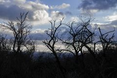 Mystical Trees Stretching Their Leafless Branches into the Sky. Trees stretching their leafless branches upwards into the cloudy sky. Mystical mood of late fall stock photos