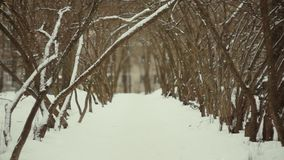 Mystical Winter Alley stock video footage