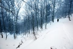 Mystical winter forest covered with snow on cloudy day Stock Images
