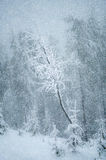 Mystical winter landscape with tree during snowfall New Year, t. Ravel, loneliness - concept Royalty Free Stock Photos