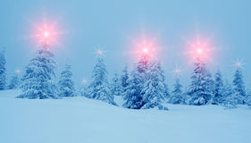 Mystical winter landscape with trees at Christmas lights shine. New Year, travel, Harmony - concept Stock Photo