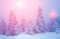 Mystical winter landscape with trees at Christmas lights shine. New Year, travel, Harmony - concept Royalty Free Stock Photos