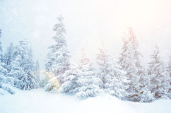 Mystical winter landscape of trees in sunlight during snowfall Stock Image