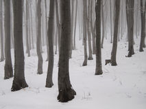 Mystical winter woodland Stock Photography