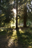 Mystical wood Royalty Free Stock Images