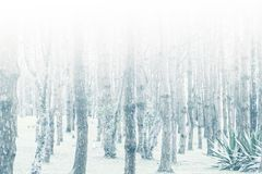 Mystical wood in the foggy Royalty Free Stock Image