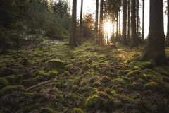 Mysticusbos, grond van groen mos wordt behandeld dat Backlit bomen Mysticusatmosfeer royalty-vrije stock afbeelding