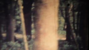 Mystiek bos stock videobeelden