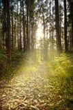 Mystiek bos bij zonsondergang Stock Foto's
