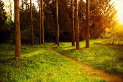 Mystiek dicht bos met voetpad het flikkeren zonlicht Stock Fotografie