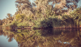 Mystiek eiland De bezinning in het kalme water Stock Afbeelding