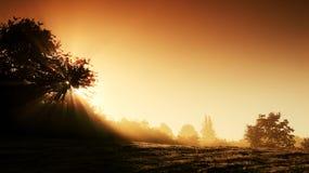 Mystiek landschap bij zonsopgang Stock Afbeeldingen