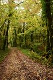 Mystiek mooi bemost boslandschap, Frankrijk royalty-vrije stock foto