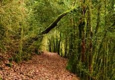 Mystiek mooi bemost boslandschap, Frankrijk stock foto