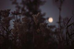 Mystieke achtergrond van weide met lang gras en bloemen dichtbij naaldbos bij nacht in volle maanlicht stock afbeelding