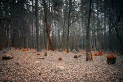 Mystieke begraafplaats in het hout Stock Afbeelding