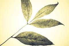 Mystieke bladeren Royalty-vrije Stock Afbeeldingen
