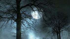 Mystieke maannacht Griezelig boomsilhouet stock videobeelden
