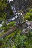Mystiker fällt Yellowstone Nationalpark stockfoto