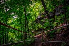Mystikerskogväg Arkivfoto