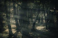 Mystique Dark Forest Royalty Free Stock Photo