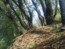 8 mystische Bäume lizenzfreie stockfotos