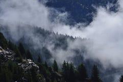 Mystische Gebirgseinstellung Morgennebel und Kiefernholz Stockfotos