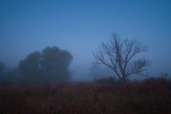 Mystische Landschaft in den blauen Tönen Stockfotografie