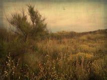 Mystische Landschaft durch die Küste von Süd-Frankreich stockbild