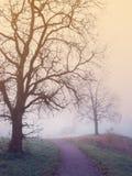 Mystische Landschaft mit Baum, Straße und Nebel lizenzfreie stockfotografie