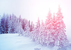 Mystische Winterlandschaft von Bäumen im Sonnenlicht neues Jahr, Reise Stockbilder