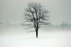 Mystischer Baum Stockfotografie