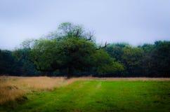 Mystischer Baum Lizenzfreie Stockbilder
