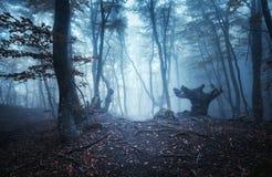 Mystischer dunkler Herbstwald mit Spur im blauen Nebel Stockfotos