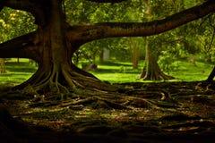 Mystischer Garten Stockfotos