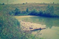 Mystischer grüner Sumpf Stockfotografie