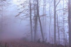 Mystischer Herbstwald Lizenzfreies Stockfoto