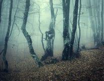 Mystischer Herbstwald mit grünem Nebel morgens Stockfotografie