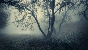 Mystischer Herbstwald mit grünem Nebel morgens Lizenzfreie Stockfotografie