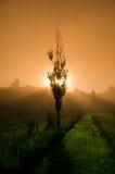 Mystischer Morgen Stockbilder