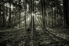 Mystischer Morgen-Sonnenaufgang Lizenzfreies Stockbild