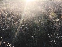 Mystischer Sonnenuntergang über einem Feld des Grases im Herbst Lizenzfreies Stockbild
