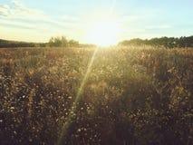 Mystischer Sonnenuntergang über einem Feld des Grases im Herbst Lizenzfreie Stockfotografie
